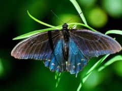 бабочки, животных, заставки