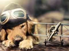 portable, собаки, рпд
