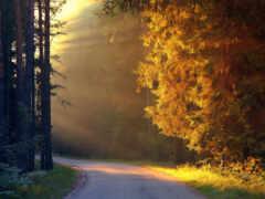 landscape, natural, лес