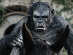 macacos, pour