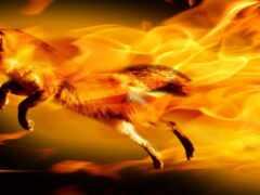 фокс, fiery, огонь