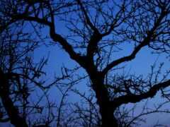 небо, ночь, дерево