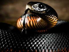 змея, змеи, zhivotnye