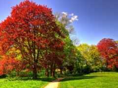 осень, pemandangan, hutan