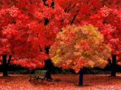 дерево, осень, oir