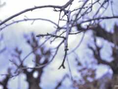 природа, дерево, веточка