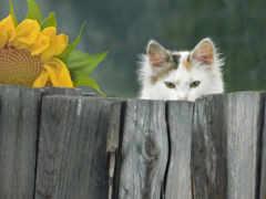 забор, кот, see