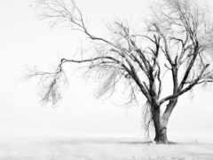 дерево, одинокое, white