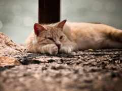 кошка, узкий, загрузить