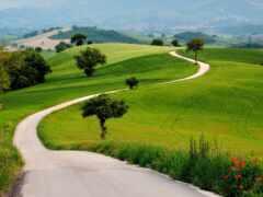 трава, hill, природа