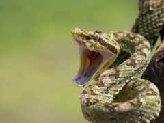 snake, змеи, пасть