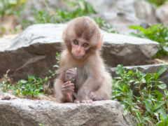 обезьяны, video, детей