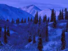 дерево, winter, pine