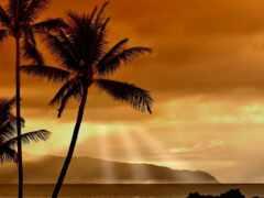palm, закат, пляж