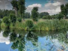 озеро, trees, трава
