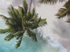 дерево, palm, пляж