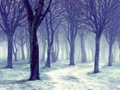 winter, много, дерево