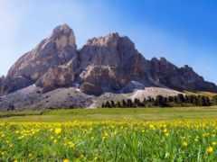summer, mount, scenery
