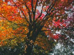 дерево, взгляд, angle
