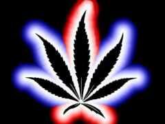 конопля, marijuana, пиратский