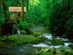 lodge, лесу, речки