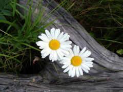 цветы, тв, region