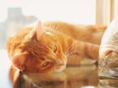 кот, lay, side