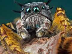 makryi, паук, макросъемка