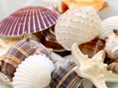 ракушки, морская, морские