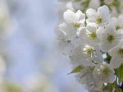 цветы, bloom, цветение