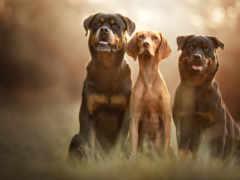 собака, dogs, щенок