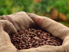 coffee, мешок, seed