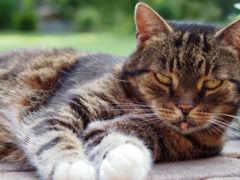 cats, home, кот