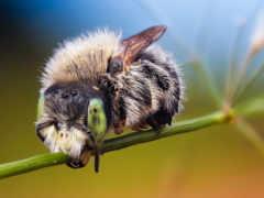 bees, животные