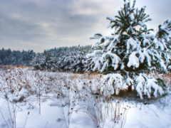 landscape, winter, природа