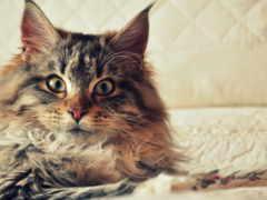 коты, приколы, кошек