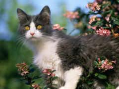 кошки, кошек, hành