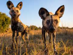 zhivotnye, африки, животных