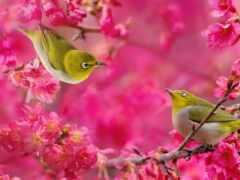 птица, белоглазка, цветы