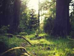 summer, лес