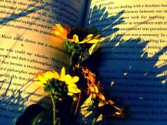 книга, cvety, книге