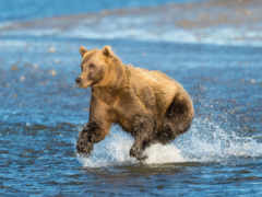 def, agua, oso
