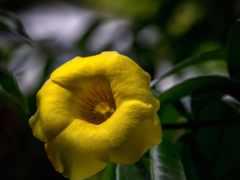 цветы, flowers, yellow