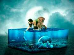 аквариум, fish