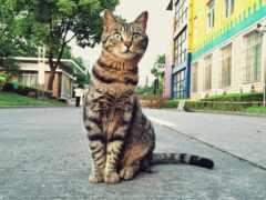 улица, кот, funart
