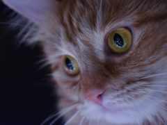 кот, desktop, взгляд