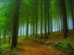 море, природа, trees