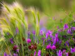 cvety, цветов, полевые