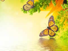 бабочка, borboleta, branch
