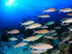 fish, megaport, coral